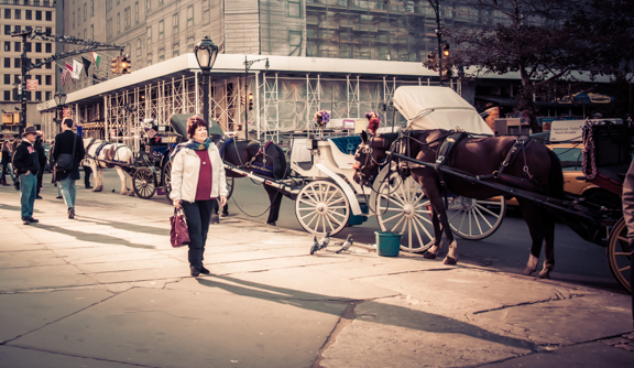 Photo of the Day: Central Park Horses