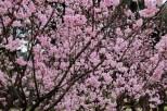 Parque-do-carmo-cerejeiras_10