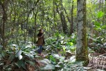 Parque-do-carmo-cerejeiras_17