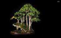 19132-bonsai-1920x1200-photography-wallpaper