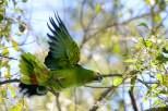 Ibirapuera-birdwatching-abr16_02