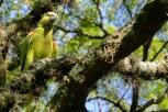 Ibirapuera-birdwatching-abr16_06