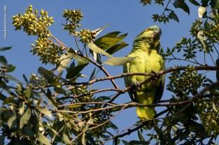 Ibirapuera-birdwatching-abr16_10