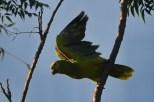 Ibirapuera-birdwatching-abr16_13