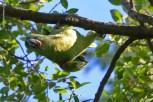 Ibirapuera-birdwatching-abr16_17