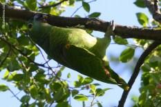 Ibirapuera-birdwatching-abr16_18