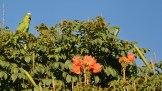 Ibirapuera-birdwatching-abr16_22