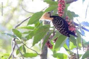 Ibirapuera-birdwatching-abr16_40