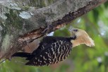 Ibirapuera-birdwatching-abr16_42