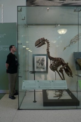 American-Museum-of-Natural-History_12