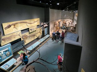 Denver-Museum-Nature-Science_19