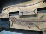 Denver-Museum-Nature-Science_21