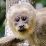 macaco-prego-galego_closes_105