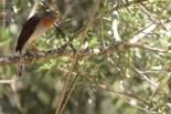 aves_campos-do-jordao_05
