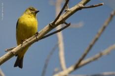 aves_campos-do-jordao_23
