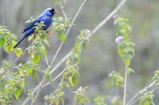aves_campos-do-jordao_24