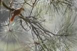 aves_campos-do-jordao_39