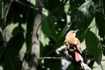 aves_campos-do-jordao_45