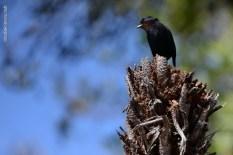 aves_campos-do-jordao_56