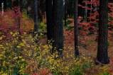yosemite-outono_24