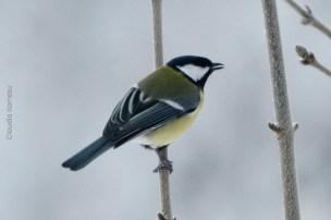 natureza-neve_16