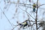 natureza-neve_22