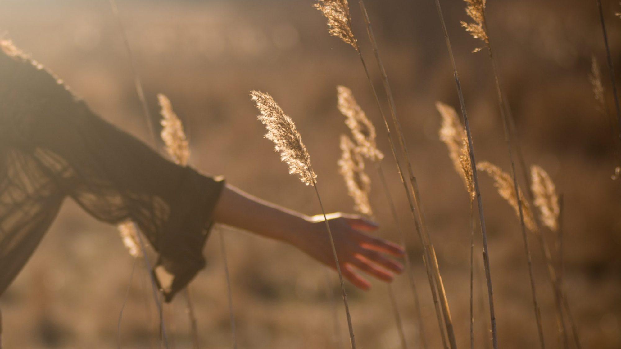 Frauenhand fasst an Gräser