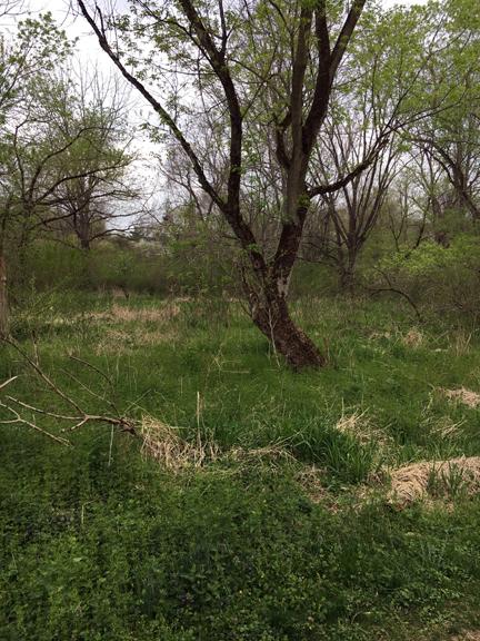 Green Ribbon Tree 8 4-19-17 small