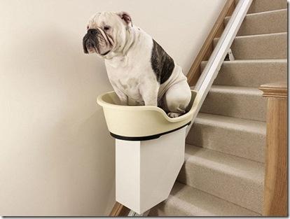 doggy-stairlift-1-thumb-550xauto-87353