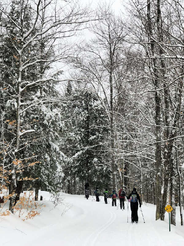 cross country skiers in quebec in winter