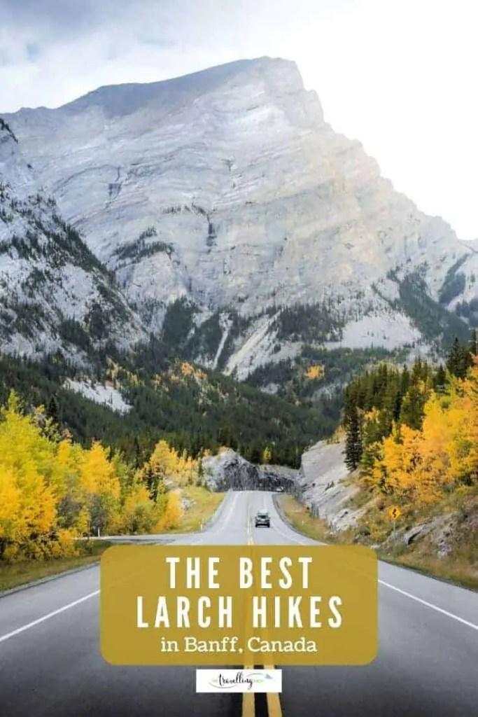 best larch hikes in banff alberta