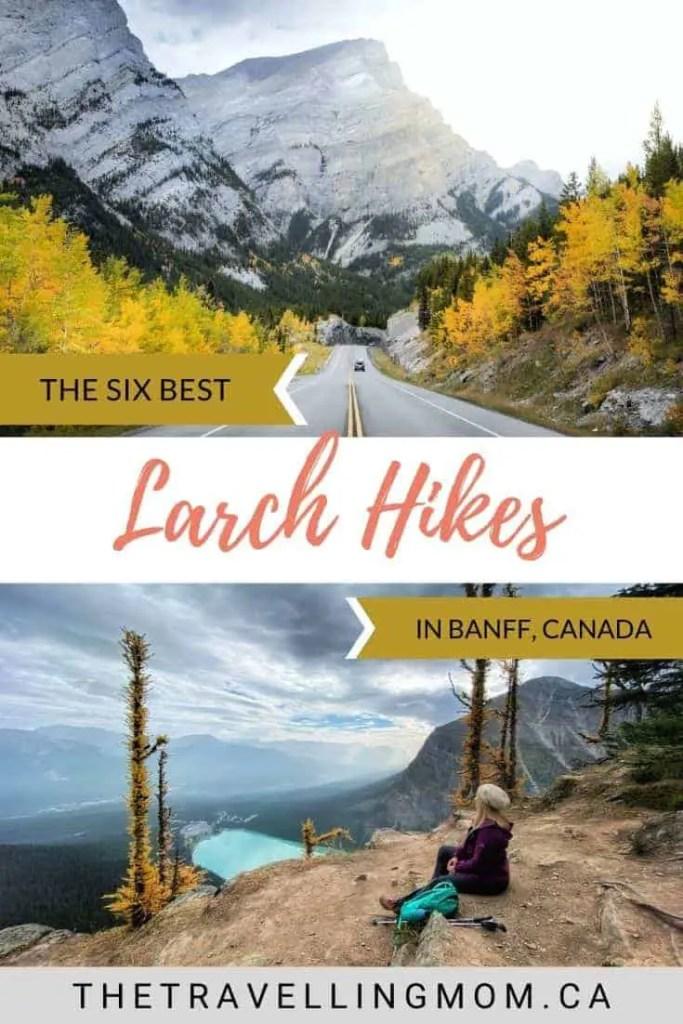 best larch hikes banff alberta