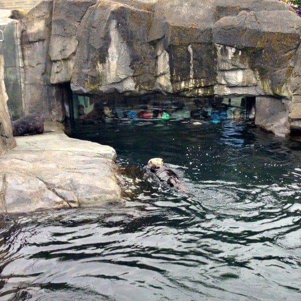 Who doesn't love a playful Vancouver Aquarium otter at feeding time? | thetravellingmom.ca