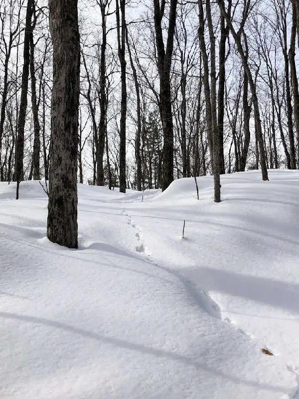 animal tracks in snow in quebec in winter