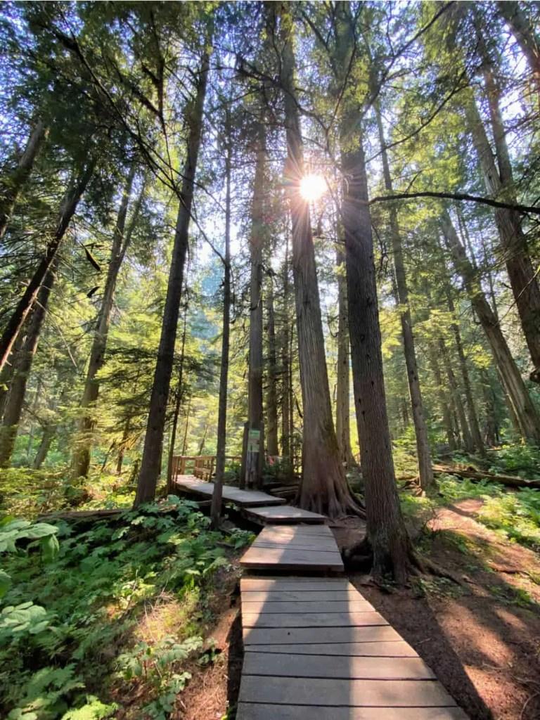 giant cedars boardwalk in revelstoke in summer