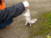 Squirrel-Training. Ja fein!