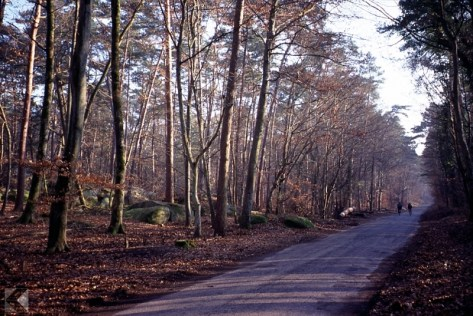 Fontainebleau (chrome shot)