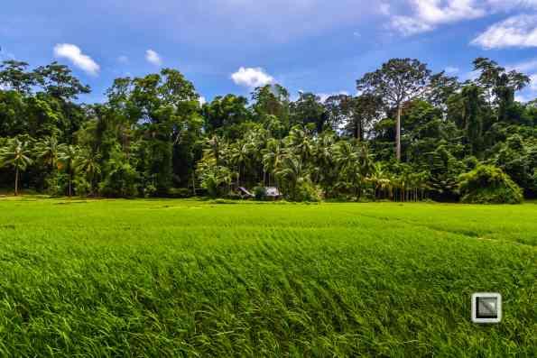 India - Andaman Islands - Havelock-15