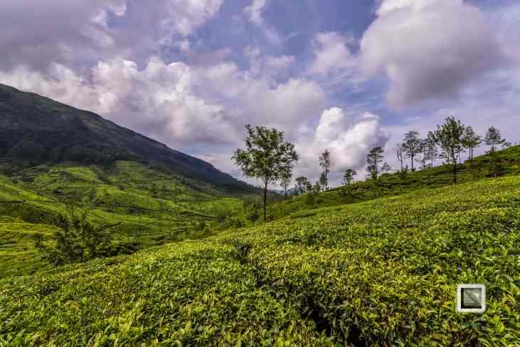 India - Kerala - Munnar-13