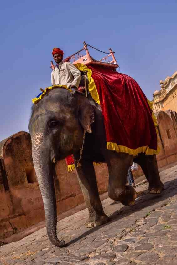 India - Rajasthan - Jaipur-8