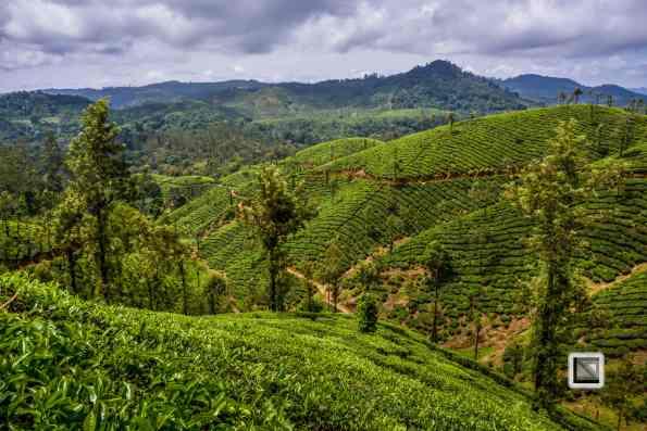 India - Tamil Nadu - Valparai-6