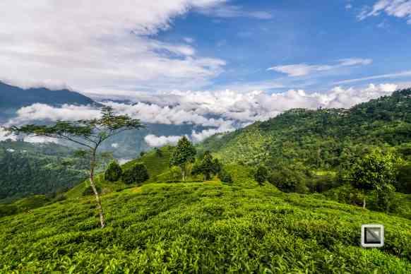 India - West Begal - Darjeeling-12
