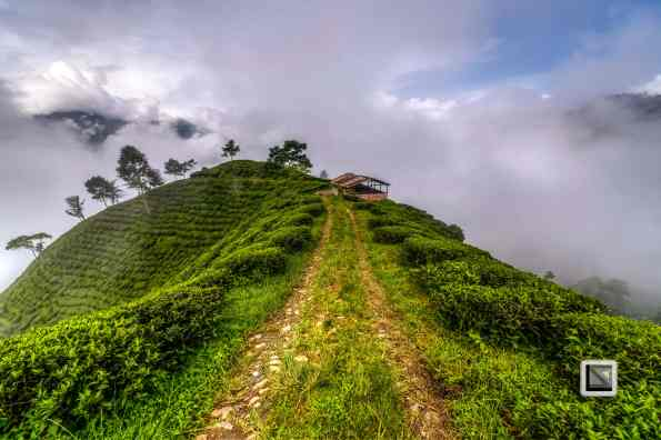 India - West Begal - Darjeeling-20