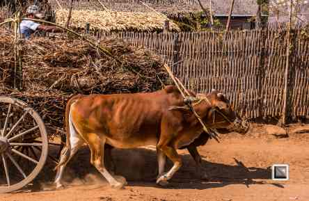 Irrawaddy River-48