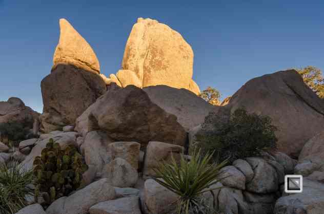 USA - California - Joshua national park