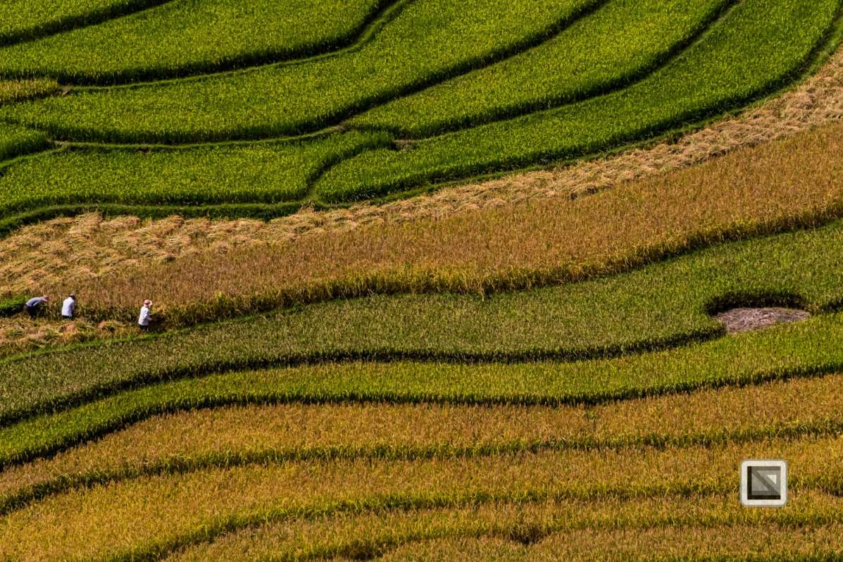 vietnam-van_chan-mu_cang_chai-yen_bai_province-121