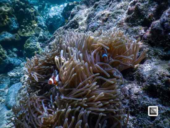 Thailand-Koh_Bulone_Island-154