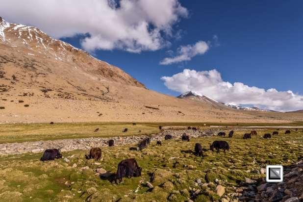 Ladakh-370