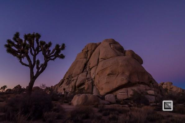 USA - California - Joshua national park-14