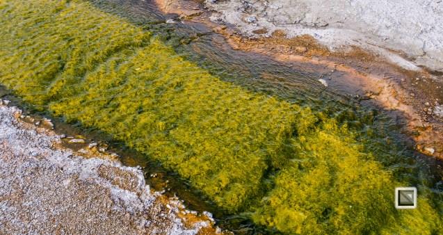 USA - Wyoming - Yellowstone National Park-110